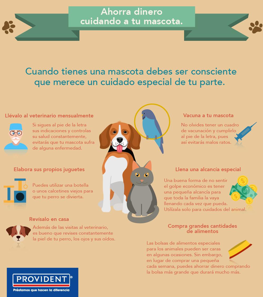 Provident-Infografía-13